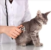 Ветеринарные клиники в Нижнем Тагиле